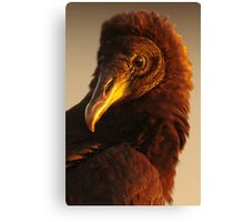 Golden Vulture Canvas Print