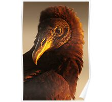 Golden Vulture Poster