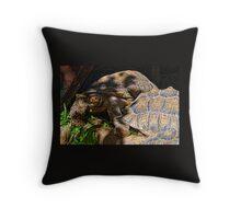 Giant Tortoise........... Throw Pillow