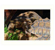 Giant Tortoise........... Art Print