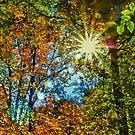 Sun Burst by Adam Northam