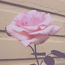 Vintage Rose by Jess Meacham