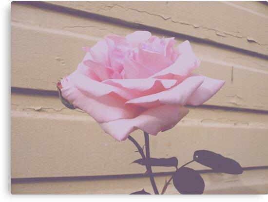 Vintage Rose by Jess Meacham