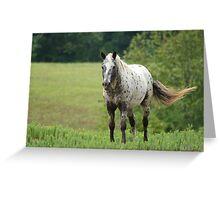 Appaloosa Beauty Greeting Card