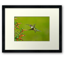 My Little BackYard Buddy (hummingbird) Framed Print