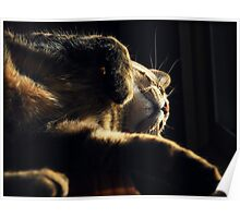 Happy Whisker Wednesday!! Poster