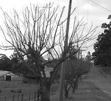 Trees along the Street by Joan Wild