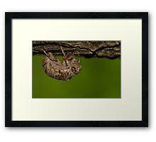 Bug  Framed Print