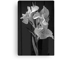 White Elegance Lily  Canvas Print