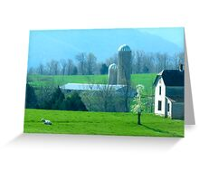 Solo White Cow Greeting Card