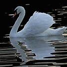 A Mystic Swan ! by jozi1