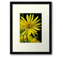 The Compass Plant Framed Print