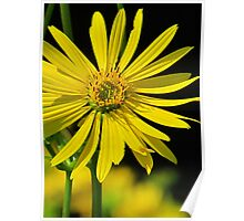 The Compass Plant Poster