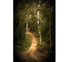 Path into the Forest Photographic Print