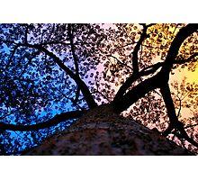 Amazonian Tree Sunset Photographic Print