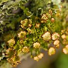 the lichen by Manon Boily