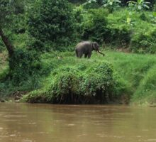 Elephant on River Bank Sticker