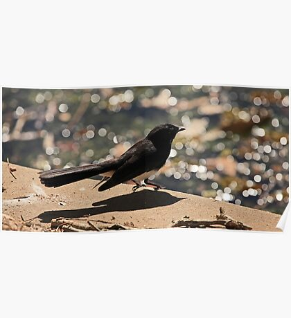 Willy Wagtail at the Lake Poster