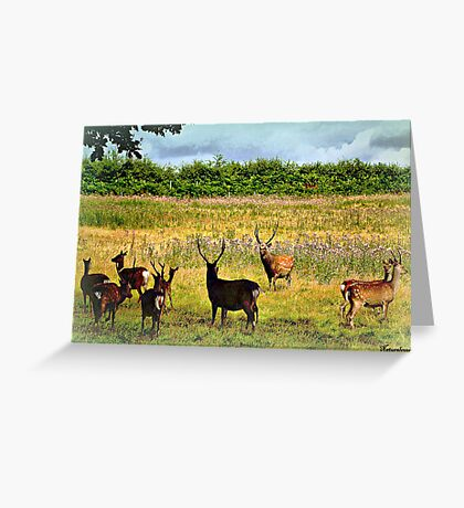 Where The Deer and The Antelope Play... Greeting Card