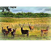 Where The Deer and The Antelope Play... Photographic Print