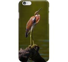 Tricolored Heron (Egretta tricolor) iPhone Case/Skin