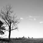 Dead tree on the prairies by Jim Sauchyn