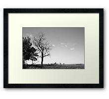 Dead tree on the prairies Framed Print