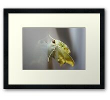 Ghost Moth Reflection Framed Print
