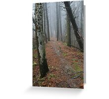 Misty woodland walk Greeting Card