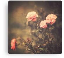Pink Vintage Roses  Canvas Print