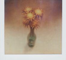 posy by Jill Auville