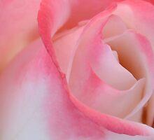 Heart Of A Rose by lynn carter