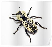 Bold Beetle Poster