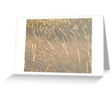 Golden grass in sun and wind Greeting Card