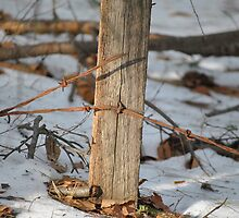 Winter fence post by Ben Clark