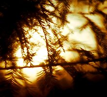 Through the Trees does Burn my Love  by Christopher Boscia