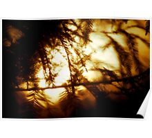 Through the Trees does Burn my Love  Poster