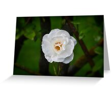 Purity - the rose Greeting Card