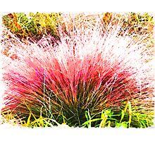 Nature's Fireworks  Photographic Print
