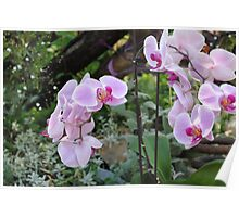 GARDEN ORCHID Poster