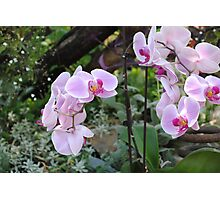 GARDEN ORCHID Photographic Print