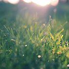 Green Gras Bokeh by syoung-photo
