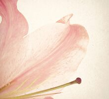 Vintage Pink Flower by Andreka