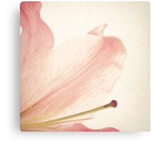 Vintage Pink Flower Canvas Print