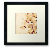 Vintage Orchids  Framed Print