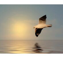 Seagull in Flight - #1 Photographic Print