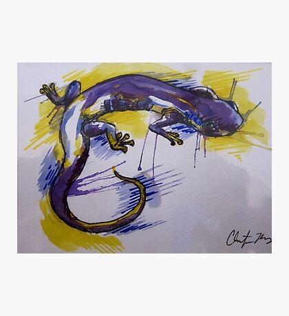 Salamander Burst Photographic Print