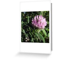 Wildflower series: Wild White Clover, No. 1 Greeting Card