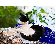 cat laying on top of a wall Photographic Print