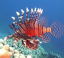 Lion Fish - So Painful by DavoSp8
